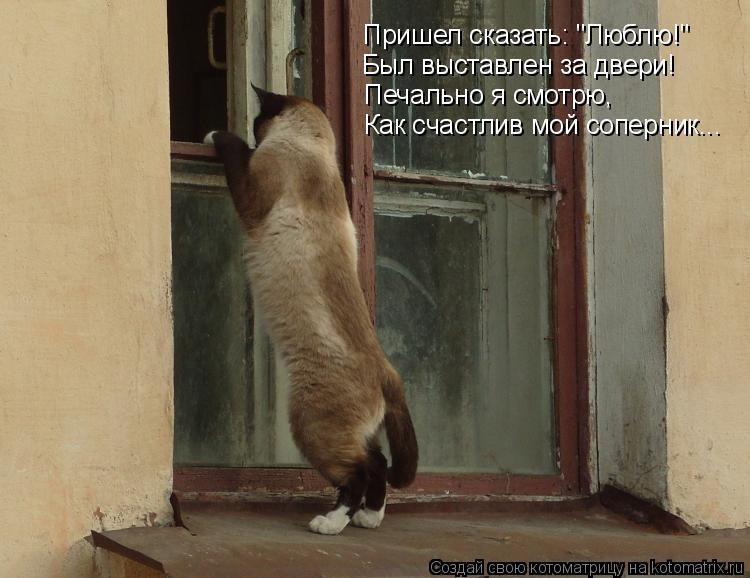 """Котоматрица: Пришел сказать: """"Люблю!"""" Был выставлен за двери! Печально я смотрю, Как счастлив мой соперник..."""