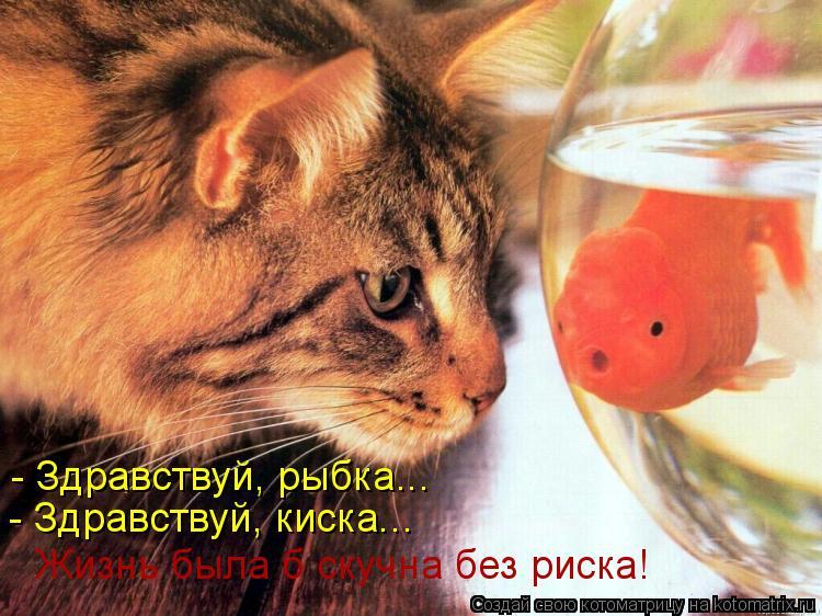Котоматрица: - Здравствуй, рыбка... - Здравствуй, киска... Жизнь была б скучна без риска!
