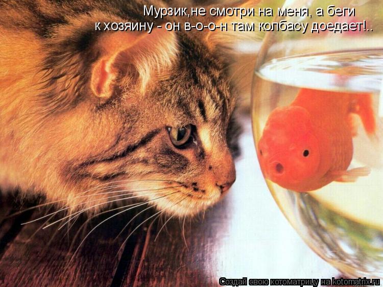 Котоматрица: Мурзик,не смотри на меня, а беги  к хозяину - он в-о-о-н там колбасу доедает!..
