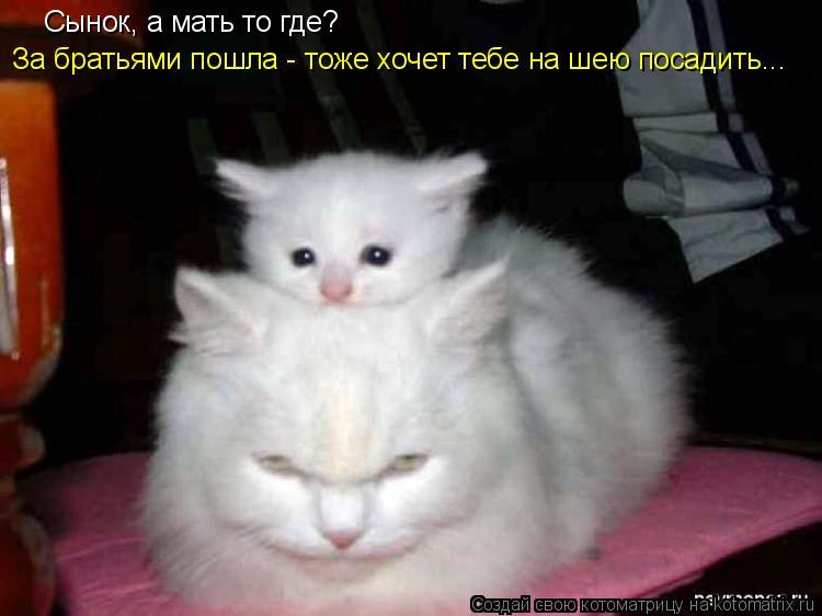 Котоматрица: Сынок, а мать то где? За братьями пошла - тоже хочет тебе на шею посадить...