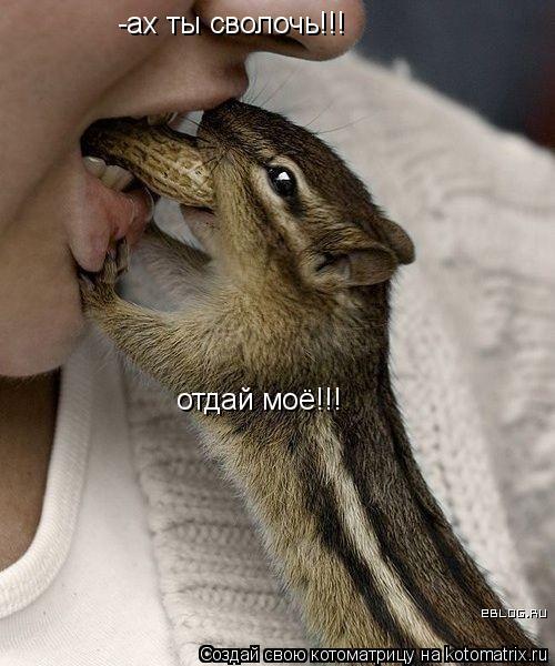Котоматрица: -ах ты сволочь!!! отдай моё!!!