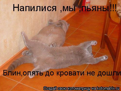 Котоматрица: Напилися ,мы ,пьяны!!! Блин,опять до кровати не дошли!