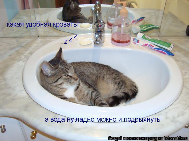 Котоматрица: а вода ну ладно можно и подрыхнуть! какая удобная кровать! z z z