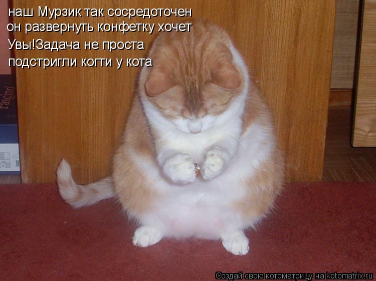 Котоматрица: наш Мурзик так сосредоточен он развернуть конфетку хочет Увы!Задача не проста подстригли когти у кота