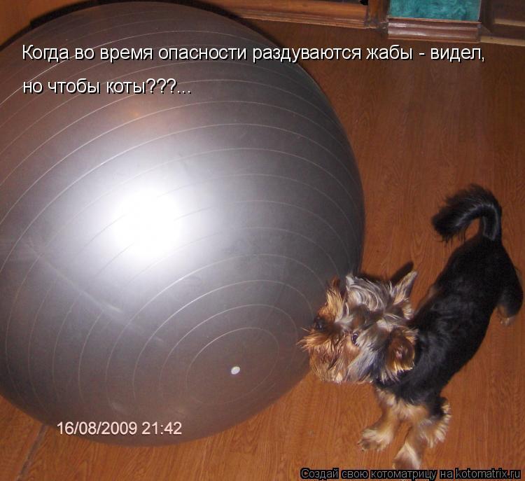 Котоматрица: Когда во время опасности раздуваются жабы - видел, но чтобы коты???...