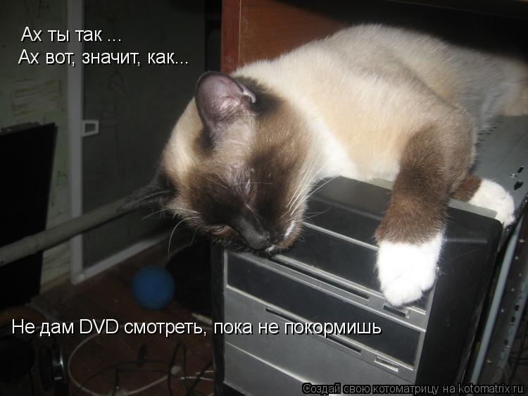 Котоматрица: Ах ты так ... Ах вот, значит, как... Не дам DVD смотреть, пока не покормишь