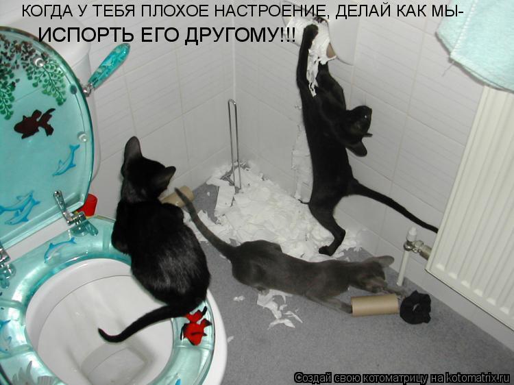 Котоматрица: КОГДА У ТЕБЯ ПЛОХОЕ НАСТРОЕНИЕ, ДЕЛАЙ КАК МЫ- ИСПОРТЬ ЕГО ДРУГОМУ!!!
