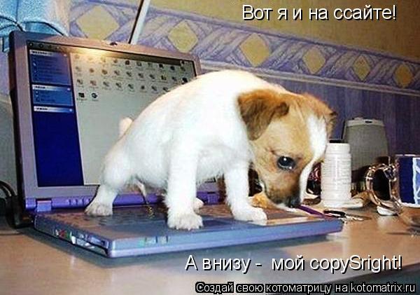 Котоматрица: Вот я и на ссайте! А внизу -  мой copySright!