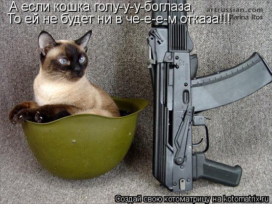 Котоматрица: А если кошка голу-у-у-боглаза, То ей не будет ни в че-е-е-м отказа!!!