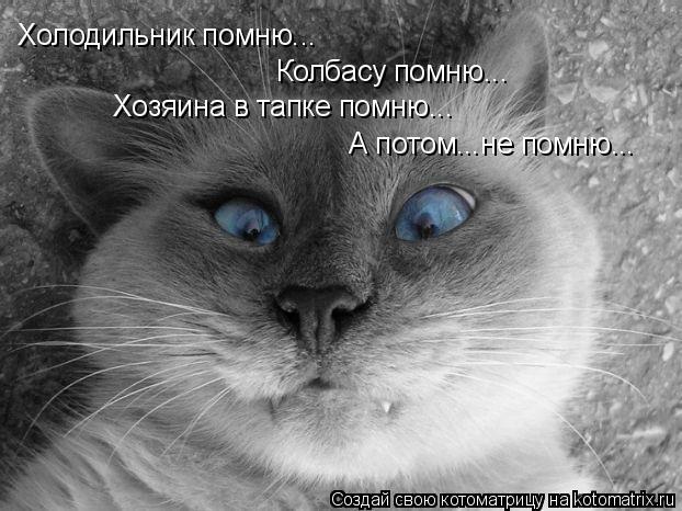 Котоматрица: Холодильник помню... Колбасу помню... Хозяина в тапке помню... А потом...не помню...