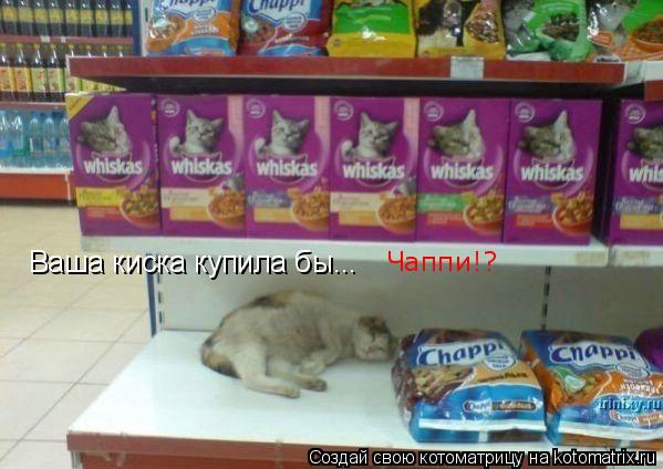 Котоматрица: Ваша киска купила бы... Чаппи!?
