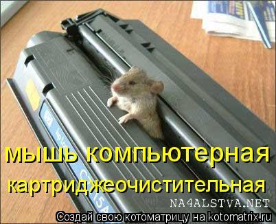 Котоматрица: мышь компьютерная картриджеочистительная