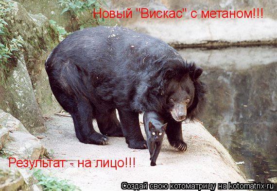"""Котоматрица: Новый """"Вискас"""" с метаном!!! Результат - на лицо!!!"""