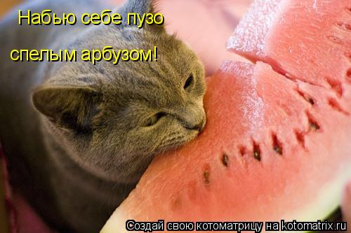 Котоматрица: Набью себе пузо спелым арбузом!