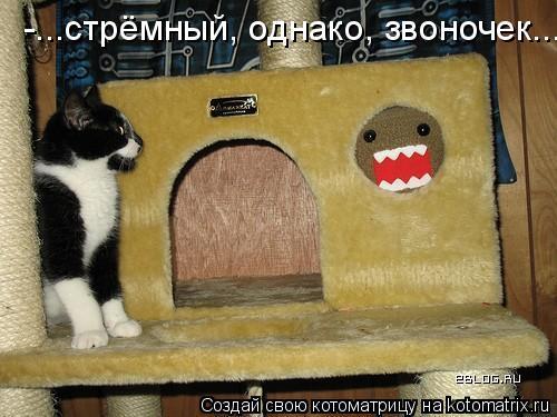 Котоматрица: -...стрёмный, однако, звоночек....