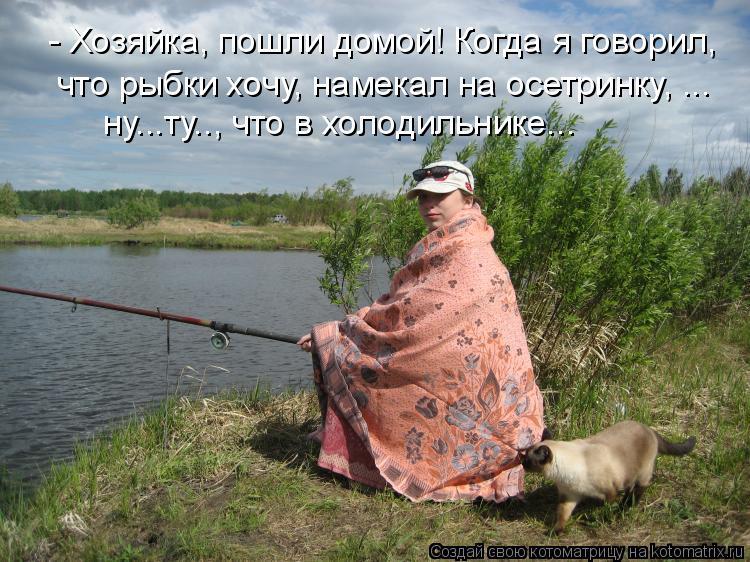 Котоматрица: - Хозяйка, пошли домой! Когда я говорил,  что рыбки хочу, намекал на осетринку, ... ну...ту.., что в холодильнике...
