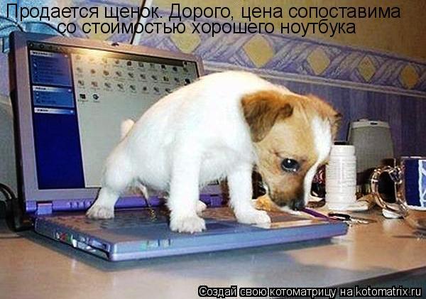 Котоматрица: Продается щенок. Дорого, цена сопоставима со стоимостью хорошего ноутбука