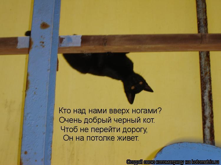 Котоматрица: Кто над нами вверх ногами? Очень добрый черный кот. Чтоб не перейти дорогу, Он на потолке живет.