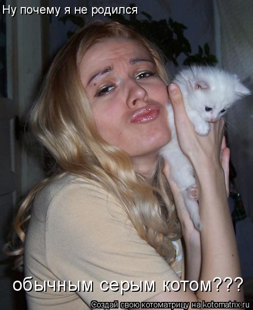 Котоматрица: Ну почему я не родился  обычным серым котом???