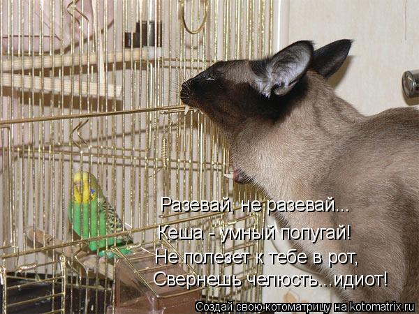 Котоматрица: Разевай, не разевай... Кеша - умный попугай! Не полезет к тебе в рот,  Свернешь челюсть...идиот!