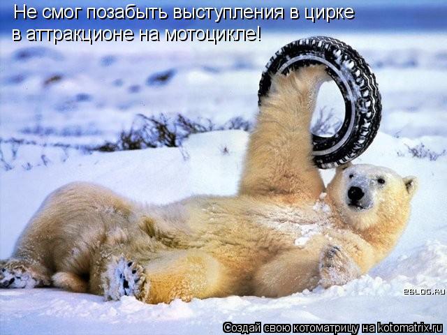 Котоматрица: Не смог позабыть выступления в цирке в аттракционе на мотоцикле!