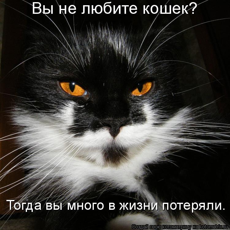 Котоматрица: Вы не любите кошек? Тогда вы много в жизни потеряли.