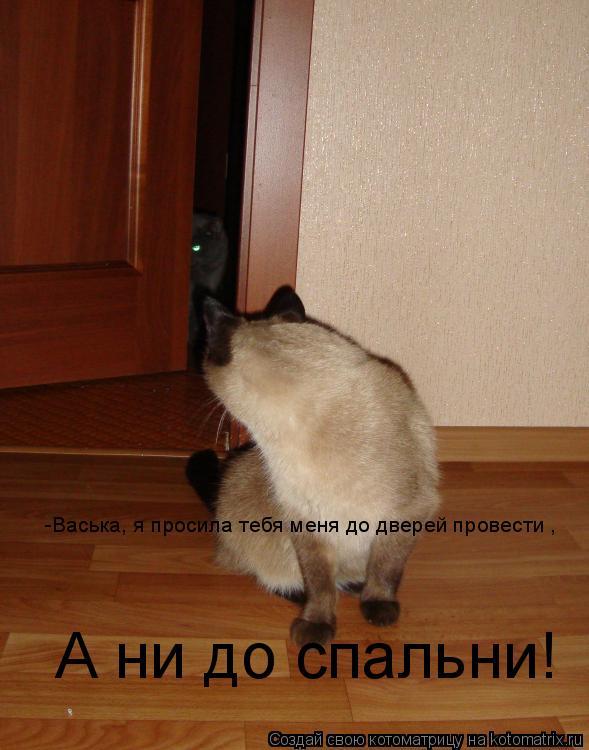 Котоматрица: -Васька, я просила тебя меня до дверей провести , А ни до спальни!