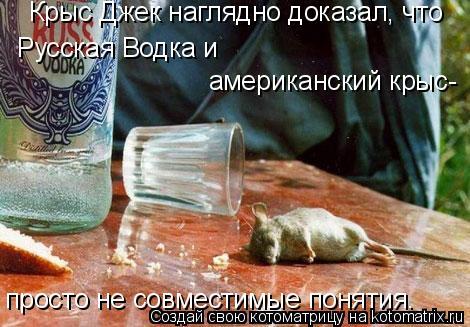 Котоматрица: Русская Водка и  американский крыс- Крыс Джек наглядно доказал, что просто не совместимые понятия.