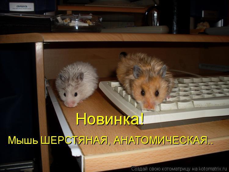 Котоматрица: Новинка! Мышь ШЕРСТЯНАЯ, АНАТОМИЧЕСКАЯ..