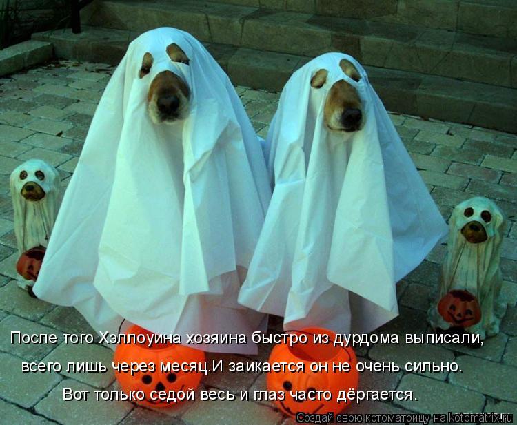 Котоматрица: После того Хэллоуина хозяина быстро из дурдома выписали,  всего лишь через месяц.И заикается он не очень сильно. Вот только седой весь и гла