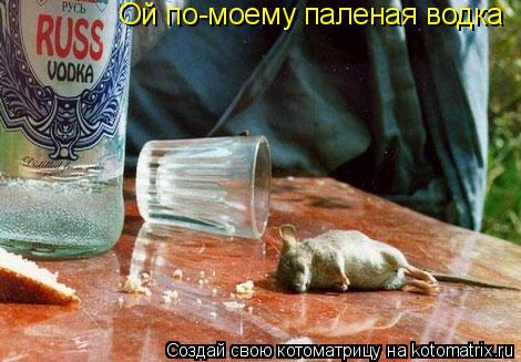 Котоматрица: Ой по-моему паленая водка