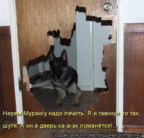 Котоматрица: Нервы Мурзику надо лечить. Я и гавкнул то так, шутя. А он в дверь ка-а-ак ломанётся!..