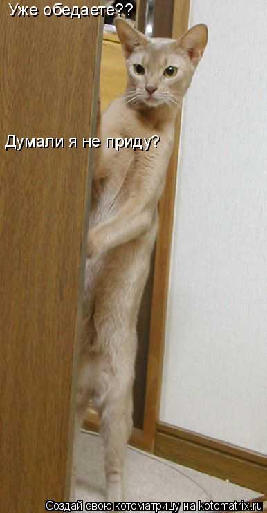 Котоматрица: Уже обедаете?? Думали я не приду?