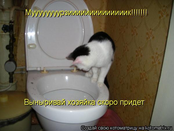 Котоматрица: Муууууууурзиииииииииииииик!!!!!!! Выныривай хозяйка скоро придет
