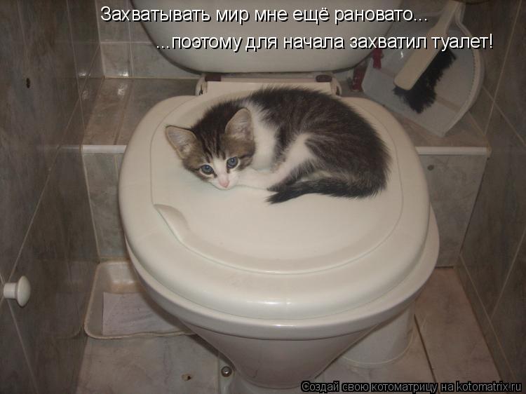Котоматрица: Захватывать мир мне ещё рановато... ...поэтому для начала захватил туалет!
