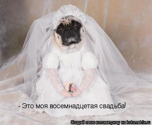 Котоматрица: - Это моя восемнадцетая свадьба !