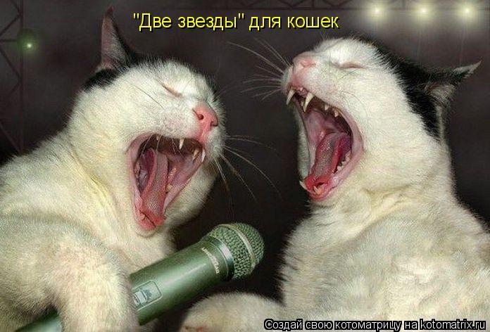 "Котоматрица: ""Две звезды"" для кошек"