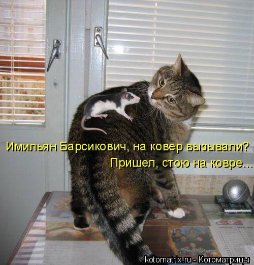 Котоматрица: Имильян Барсикович, на ковер вызывали? Пришел, стою на ковре....