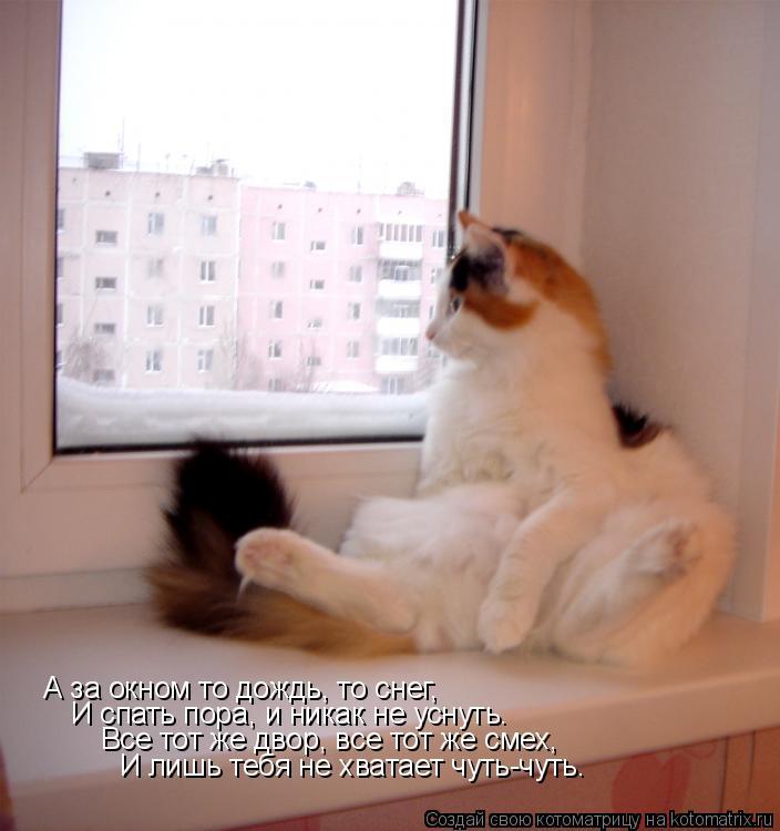 Котоматрица: А за окном то дождь, то снег, И спать пора, и никак не уснуть.  Все тот же двор, все тот же смех, И лишь тебя не хватает чуть-чуть…
