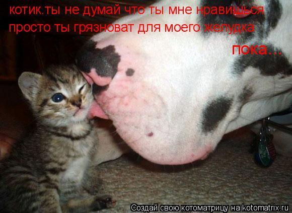 Котоматрица: котик.ты не думай что ты мне нравишься просто ты грязноват для моего желудка пока...