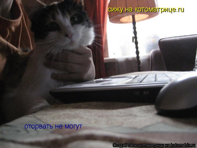 Котоматрица: сижу на котоматрице.ru  оторвать не могут