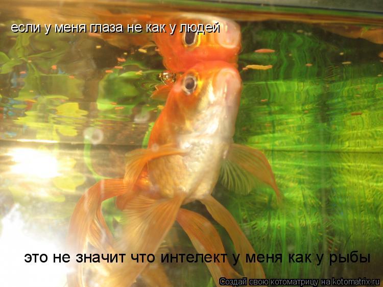 Котоматрица: если у меня глаза не как у людей это не значит что интелект у меня как у рыбы