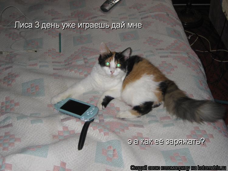 Котоматрица: Лиса 3 день уже играешь дай мне  э а как её заряжать?
