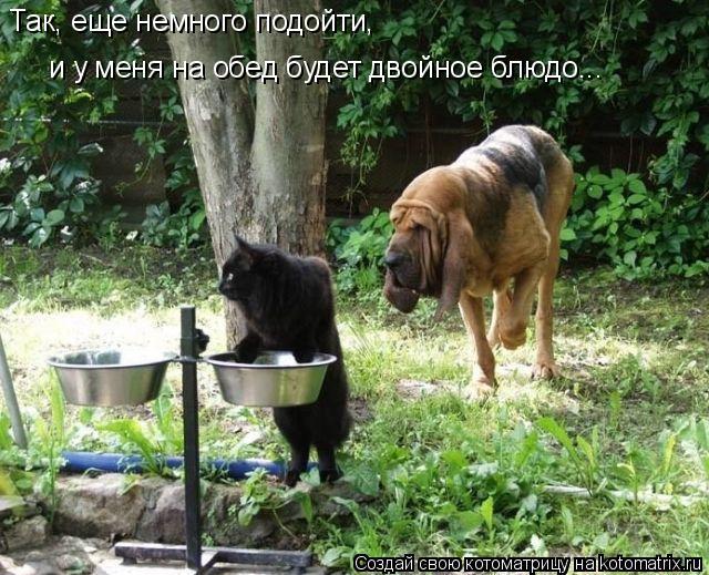 Котоматрица: Так, еще немного подойти,  и у меня на обед будет двойное блюдо...