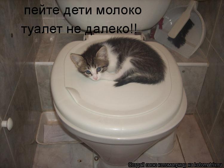 Котоматрица: пейте дети молоко туалет не далеко!!