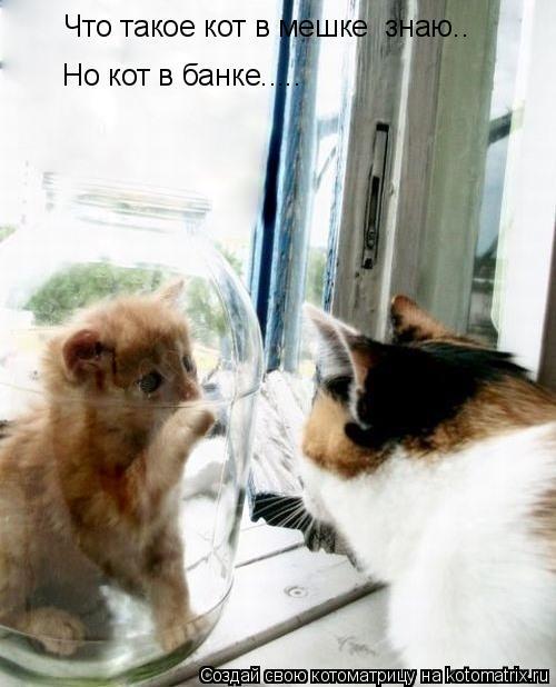 Котоматрица: Что такое кот в мешке  знаю.. Но кот в банке.....