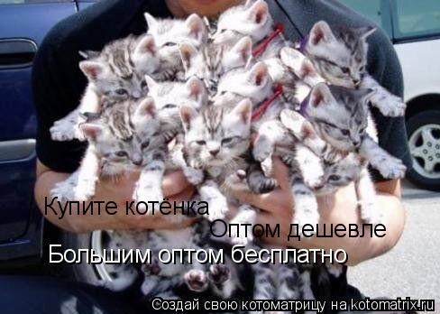 Котоматрица: Купите котёнка Оптом дешевле Большим оптом бесплатно