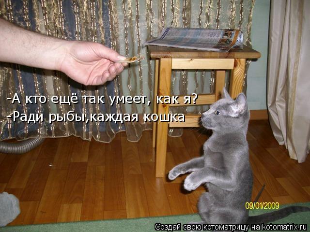 Котоматрица: -А кто ещё так умеет, как я? -Ради рыбы,каждая кошка