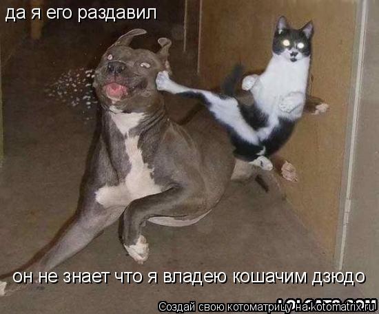 Котоматрица: да я его раздавил  он не знает что я владею кошачим дзюдо