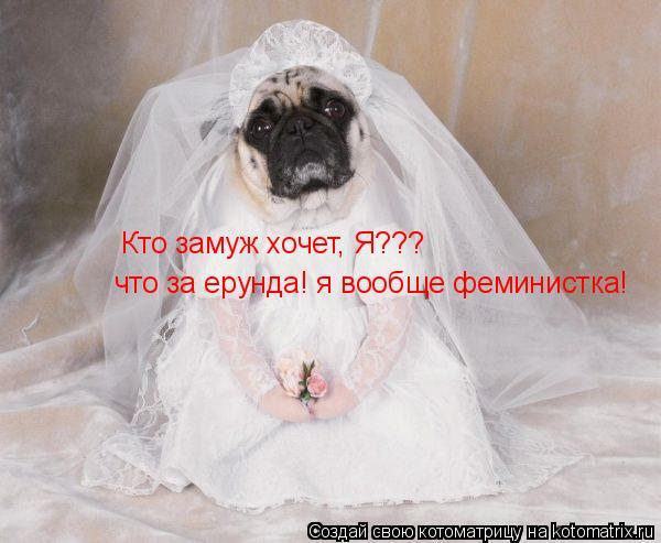 Котоматрица: Кто замуж хочет, Я??? что за ерунда! я вообще феминистка!